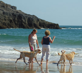 Dog Walking on Beach